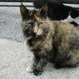 典型的な三毛猫(?)