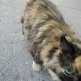 パブリックスペースに住む猫